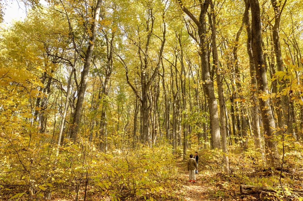 shenandoah, national park, trees, autumn, fall, yellow, transition, kids, playing, photography, photo, virginia, travel, va