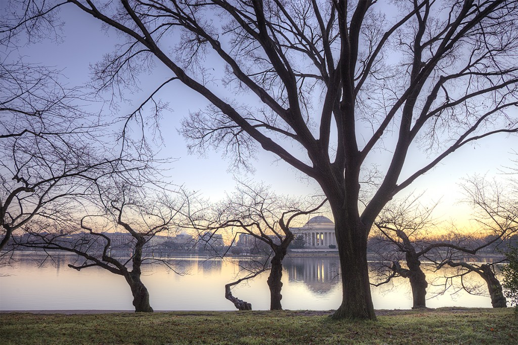 trees, tidal basin, jefferson memorial, water, sunrise, branches, washington dc, winter, travel