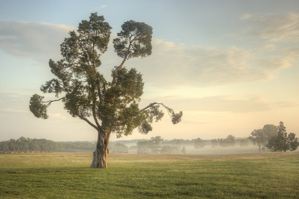 manassas, virginia, tree, visitor center, battle field, national park, virginia, va, sunrise, tree, landscape, nature