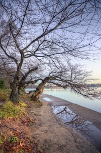tidal basin, washington dc, trees, cherry blossom, winter, cold, branches, water, potomac, capitol, united states