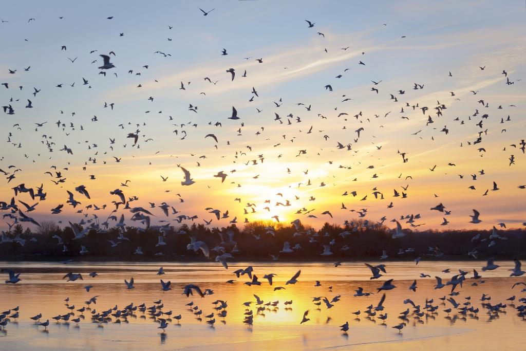birds, tidal basin, washington dc, sunset, water, reflection, ice, snow, sun, sunset, weather, travel, wildlife, dc,