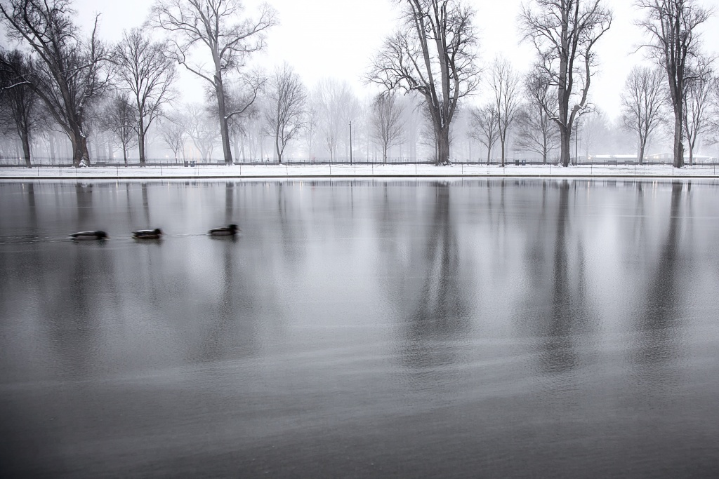 ducks, reflecting pool, trees, lincoln memorial, washington monument. washington dc, snow, winter, birds