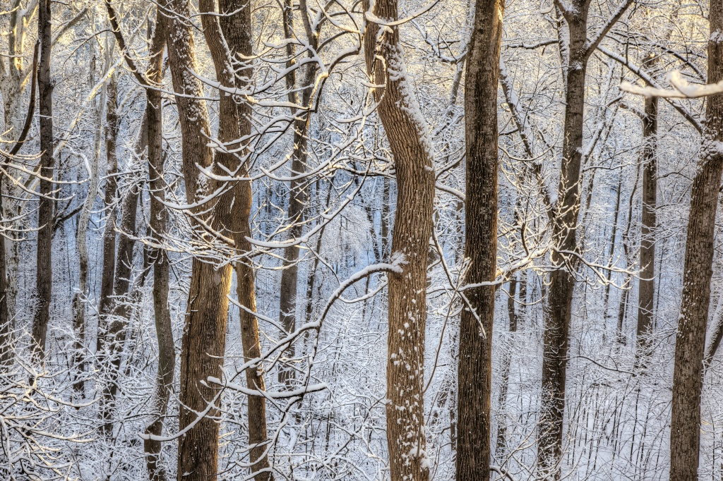 trees, great falls, lines, shapes, colors, photography, photo, snow, winter, ice, virginia, va