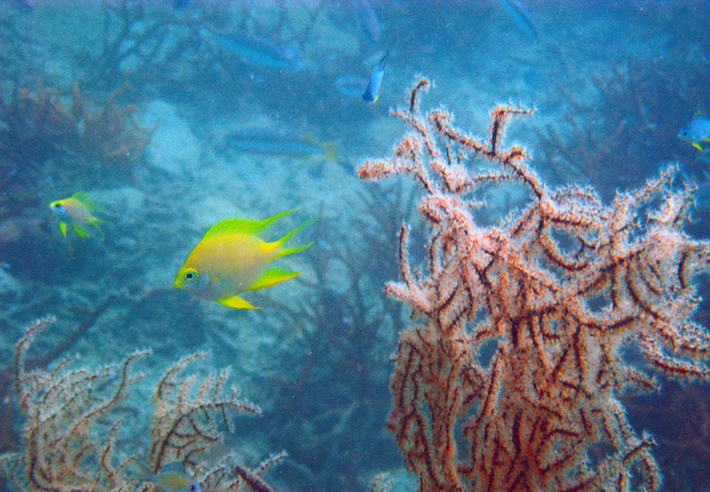 fish, underwater, thailand, krabi, orange,