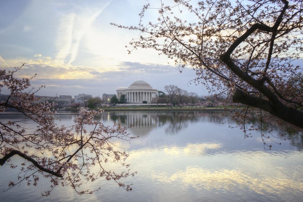cherry blossoms, washington dc, jefferson memorial, spring, reflection, tidal basin, japanese, sakura, sunrise