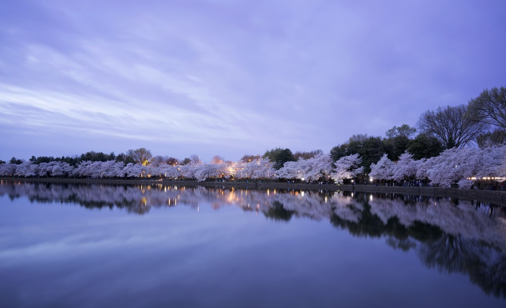 tidal basin, cherry blossoms, washington dc, visit dc, flowers, trees, reflection, tidal basin, photographers, photo, sunrise, early morning, clouds, spring
