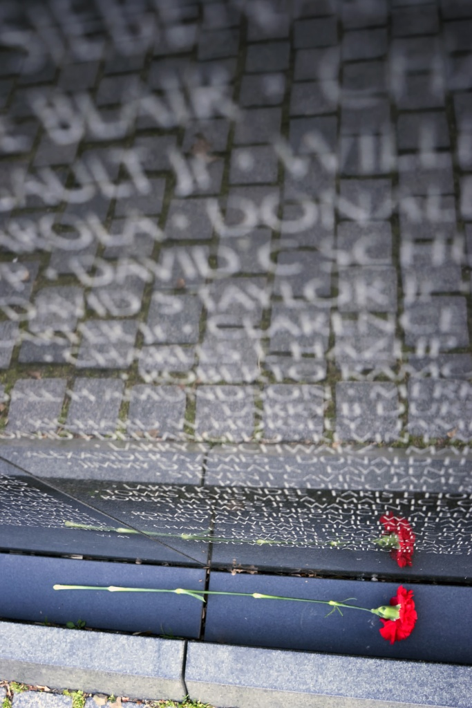 vietnam veterans, vietnam wall, vietnam memorial, washington dc, carnation, red, flower, reflection, dc,
