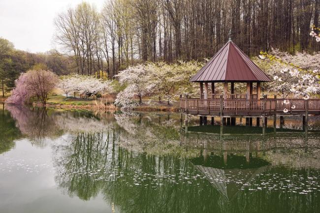meadowlark, botanical gardens, vienna, virginia, va, reflection, landscape, nature, flowers, trees