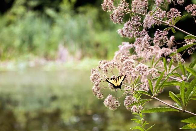 butterfly, purple, flowers, weeds, meadowlark, bokeh, yellow, nature, macro,