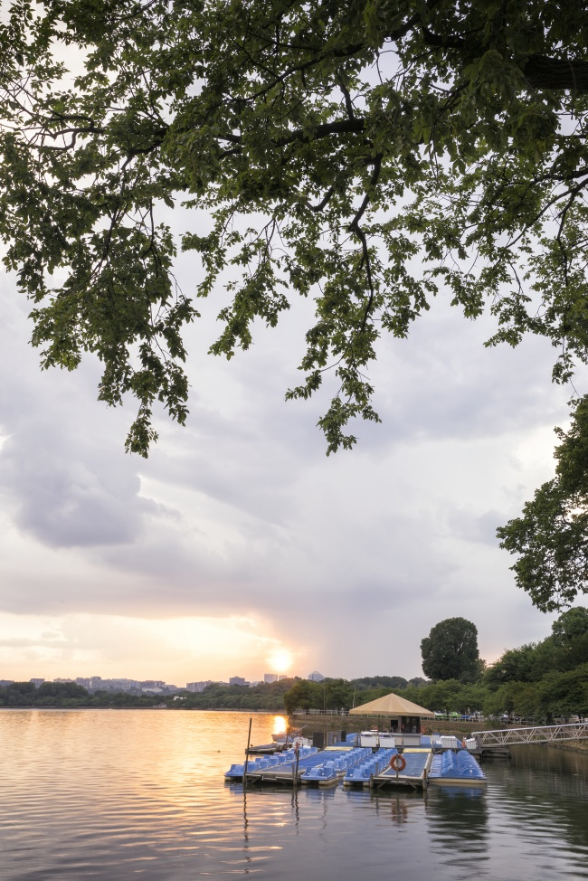 paddle boats, sunset, tidal basin, rent, washington dc, visit, travel, summer,