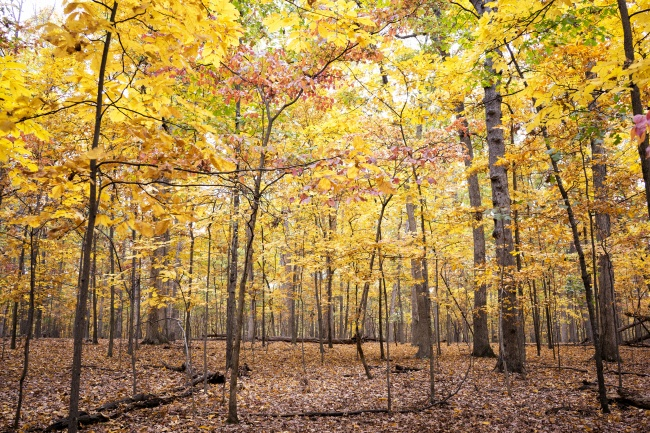 Manassas, virginia, va, travel visitva, fall, colors, trees, leaves, autumn,