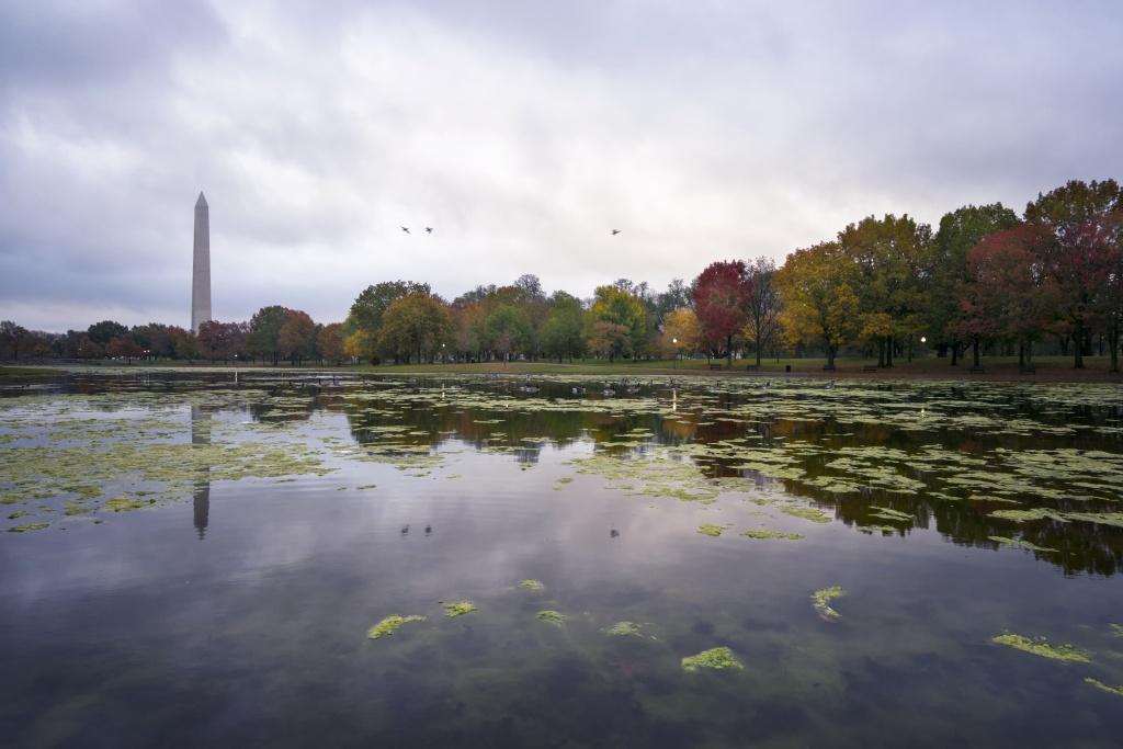 constitution gardens, washington dc, fall, autumn, visit, water, park, washington monument, trees, ducks