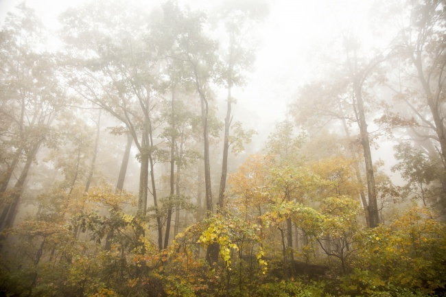 autumn, fog, trees, shenandoah, skyline drive, early morning, weather, drive, national park, fall, autumn, leaves, weekend