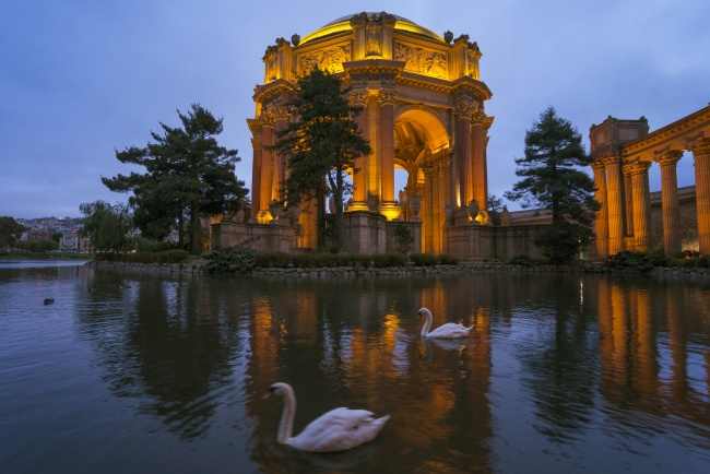 palace of fine arts, san francisco, swans, blue hour, travel, california, ca, northern, san francisco, reflection, architecture