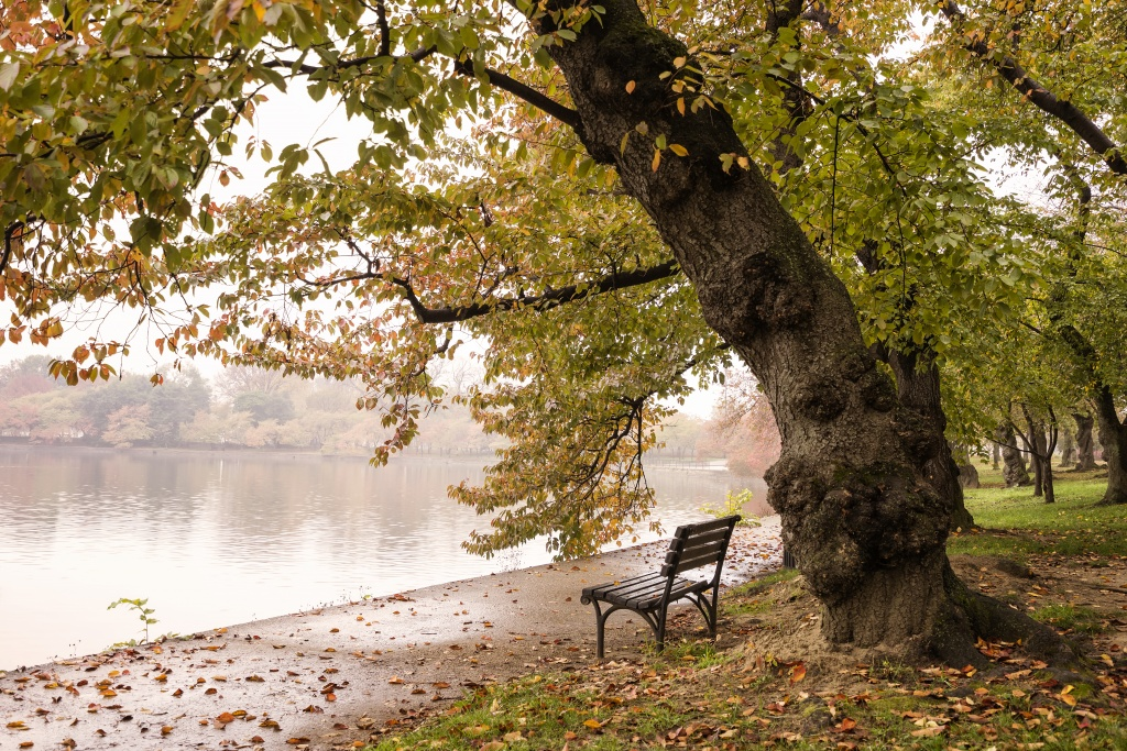tidal basin, washington dc, fog, morning, early morning, autumn, fall, bench, visit, trees, changing colors, leaves, water