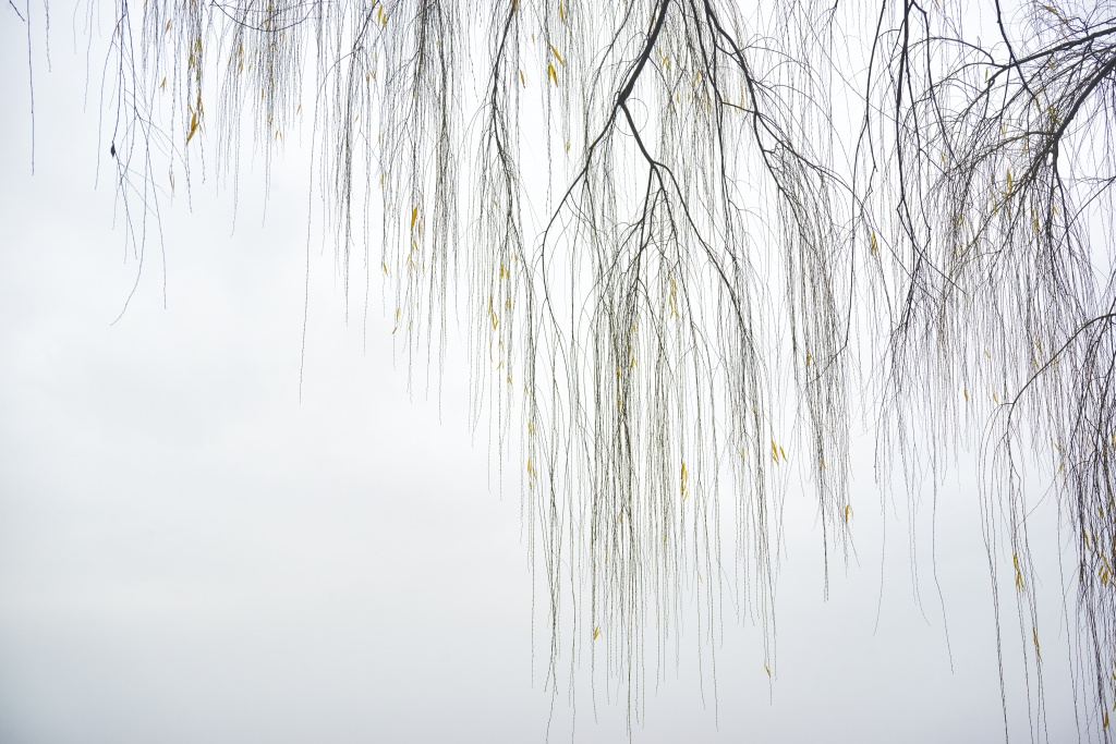 willow trees, branches, fog, ohio drive, potomac river, arlington, va, virginia, skyline, water, washington dc, weather, early morning