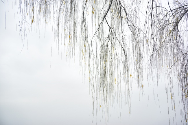 willow trees, branches, fog, ohio drive, potomac river, arlington, va, virginia, skyline, water, washington dc, weather, early morning