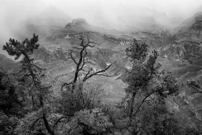 grand canyon, fog, storm, rain, arizona, travel, national park, black and white, trees, visit, south rim