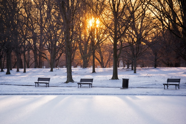 Constitution gardens, benches, snow, ice, sunrise, trees, washington dc, snowmaggedon, shadows, light, early morning, walk,