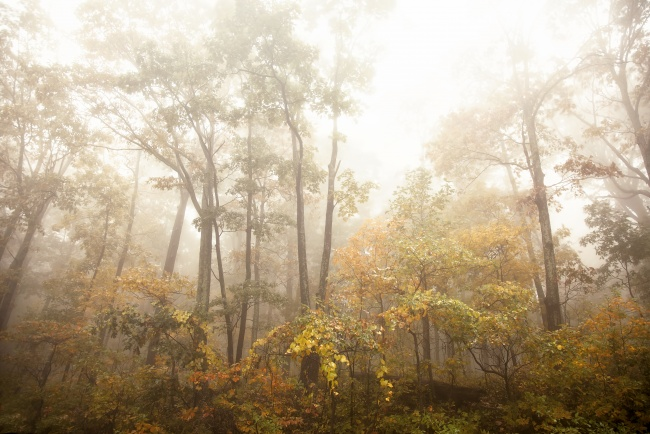 trees, fog, skyline drive, shenandoah mountains, morning, fog, trees, autumn, fall, drive, visit, drive, road trip, virginia, va