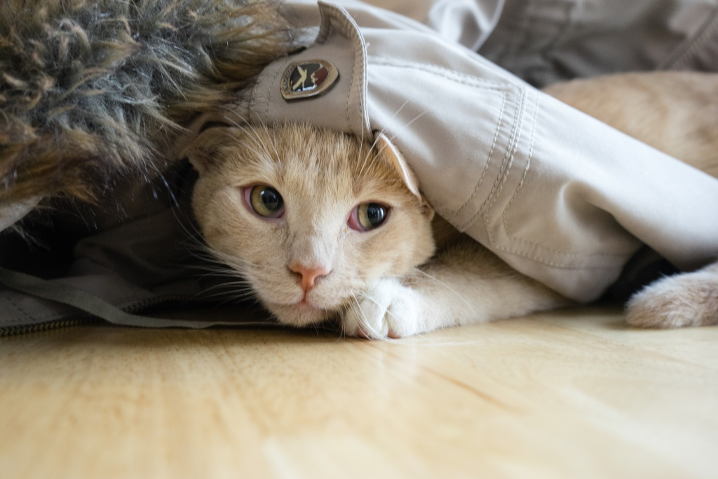 cat cafe, washington dc, georgetown, crumbs and whiskers, adoption, dessert, tea, coffee, cafe, reservations,