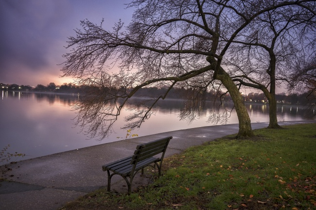 tidal basin, sunset, fog, weather, winter, trees, cherry blossom, bench, washington dc, visit,