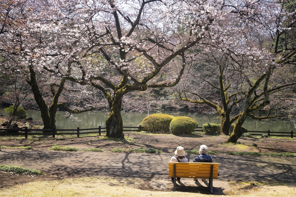 cherry blossoms, shinjuku, japan, gyoen, national garden, japan, travel, park, shibuya, park, sakura, flowers, girlfriends, rest, bench