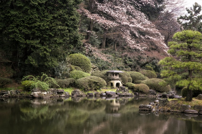 shinjuku, tokyo, japan, asia, visit, travel, gyoen, national garden, cherry blossoms, sakura, reflection, traditional japanese garden, imperial garden