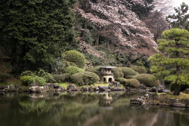 shinjuku, tokyo, japan, asia, visit, travel, gyoen, national garden, cherry blossoms, sakura, reflection, traditional japanese garden, imperial garden