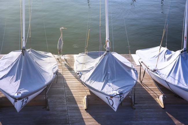 blue heron, bird, boats, annapolis, maryland, md, visit, sunrise, morning glow, harbor, spa creek,