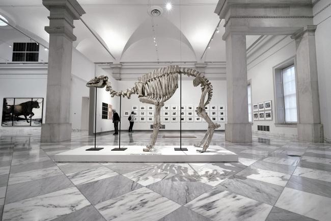 national portrait gallery, exhibits, modern, contemporary, museum, exhibits, bones, skeleton, shadows, walk with locals, washington dc