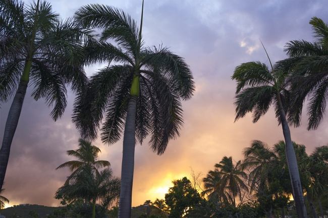palm trees, sunset, margaritaville, st thomas, virgin islands, yellow, blue, visit, travel, views