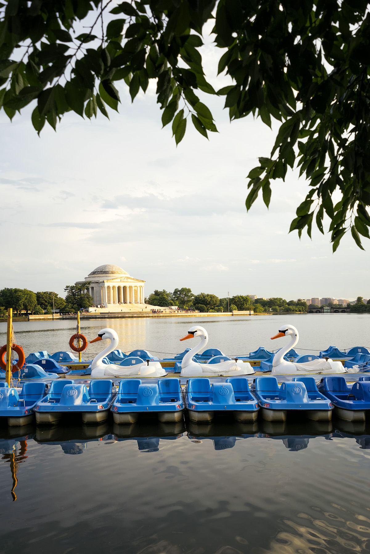 paddle boats, tidal basin, washington dc, swans, summer, weekend, jefferson memorial,