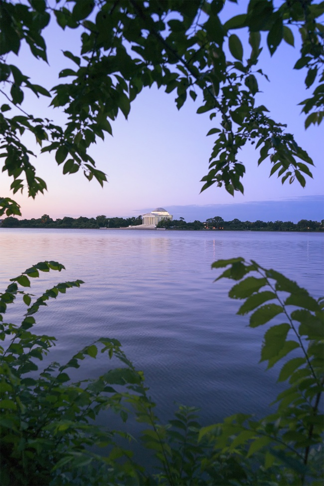 tidal basin, jefferson memorial, leaves, framing, cherry blossom trees, sunrise, washington dc,
