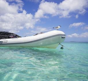 st thomas, virgin islands, beach, Caribbean, clear water, bird, beach, relax, water, travel,