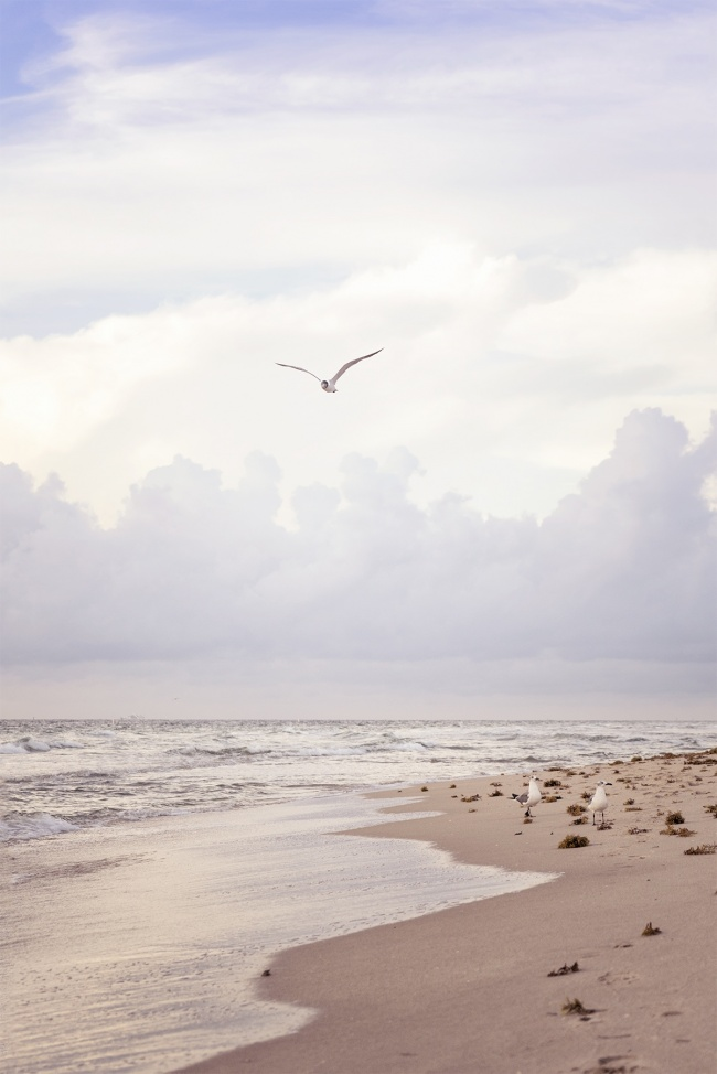 ft lauderdale, south florida, beach, seaweed, ocean, atlantic, america, florida, fl, seagulls, sunrise, walk, shore, peace, calm, water, sand