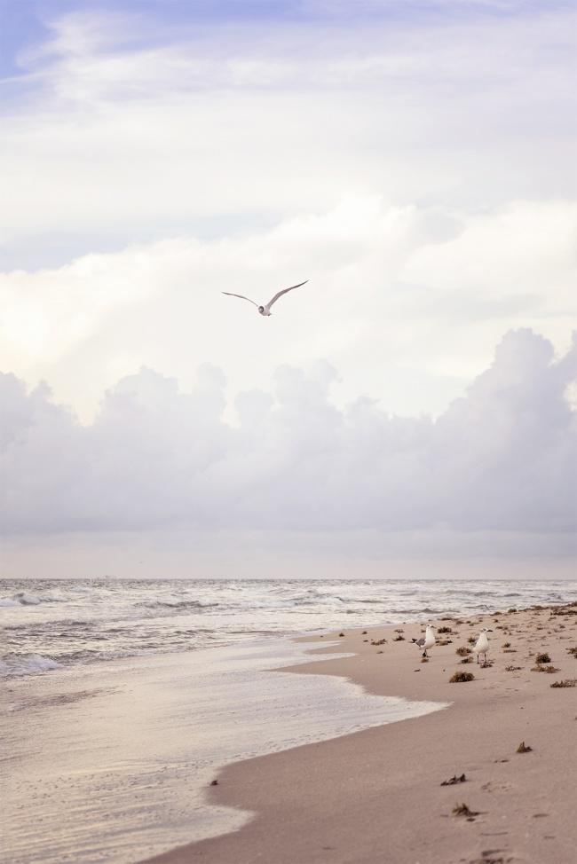 ft lauderdale, south florida, beach, seaweed, ocean, atlantic, america, florida, fl, seagulls, sunrise, walk, shore, peace, calm, water, sand