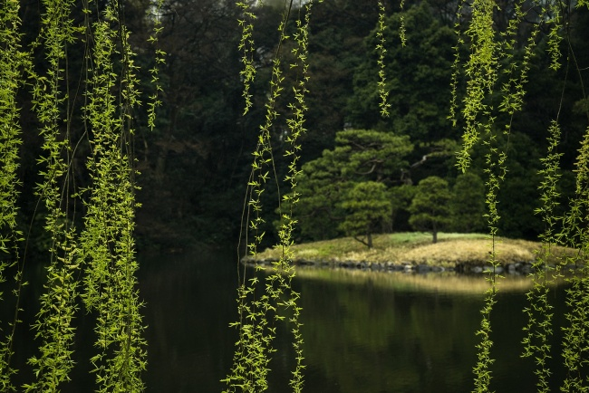 shinjuku, gyoen, national garden, asia, tokyo, japan, garden, park, shibuya, green, water, pond, monochrom, popular parks, walk