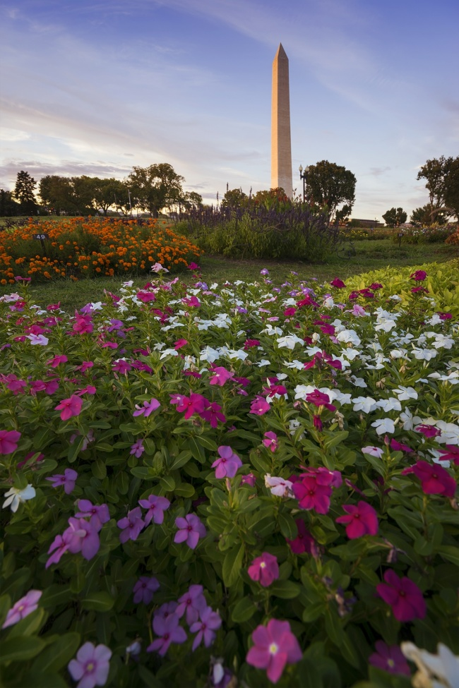floral library, washington dc, washington monument, flowers, sunset, evening, light, tidal basin, summer