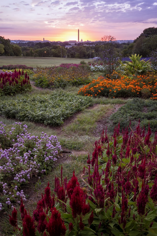 netherlands carillon, arlington, virginia, va, flowers, sunrise, washington monument, early morning, flowers, va