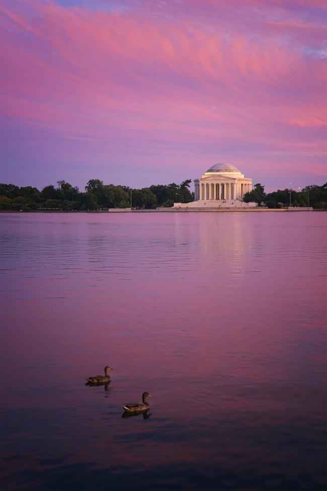 sunset, tidal basin, ducks, washington dc, visit, jefferson memorial, reflection, travel, summer, evening