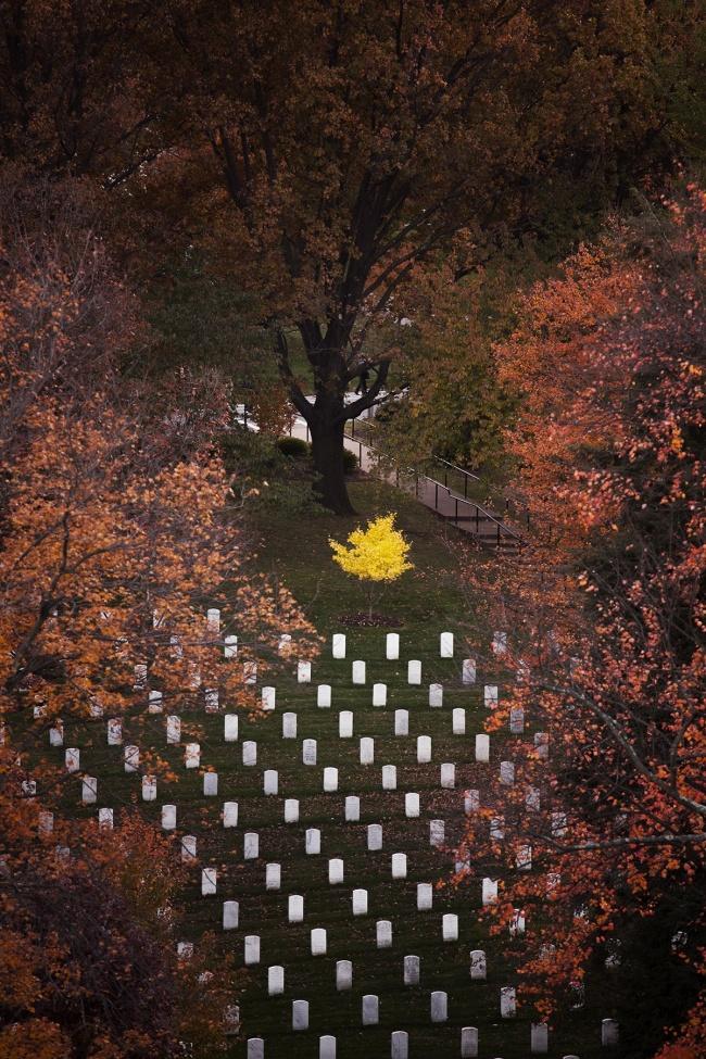 arlington natinoal cemetery, fall, autumn, virginia, va, graves, military, arlington county, potomac river, washington dc, department of army,
