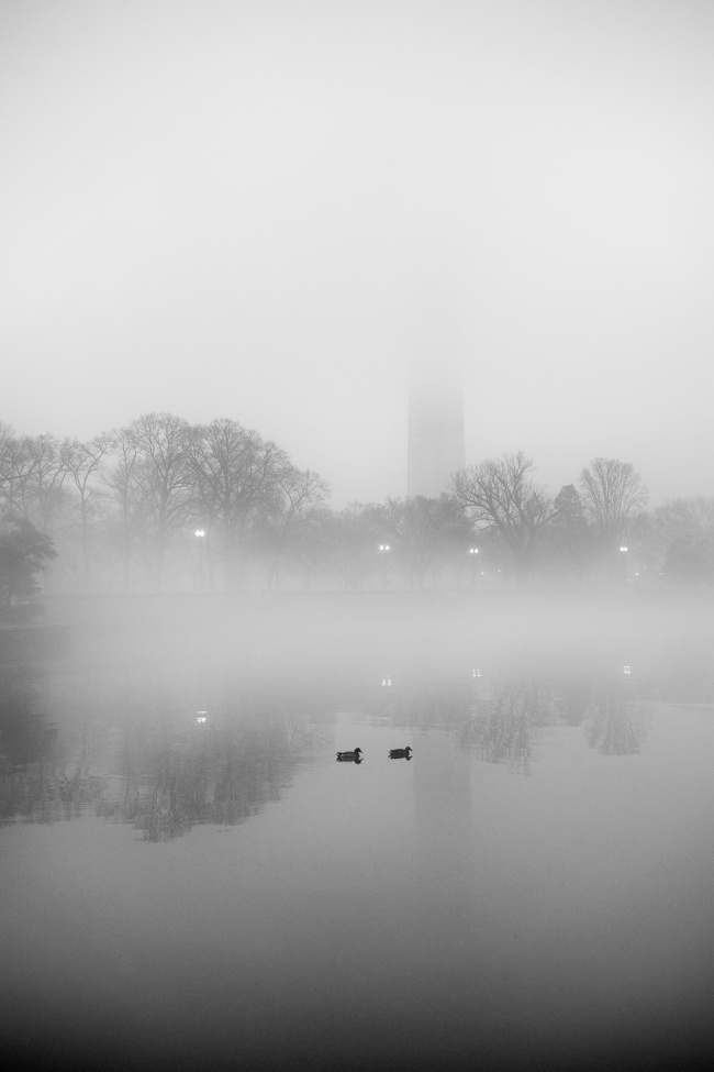 tidal basin, washington dc, fog, sunrise, early morning, ducks, reflection, west potomac park, cherry blossoms, national park, national mall, capital, east coast,