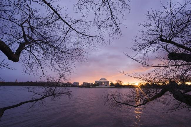 tidal basin, winter, trees, branches, west potomac park, sunrise, jefferson memorial, washington dc, east coast, united states of america, usa,