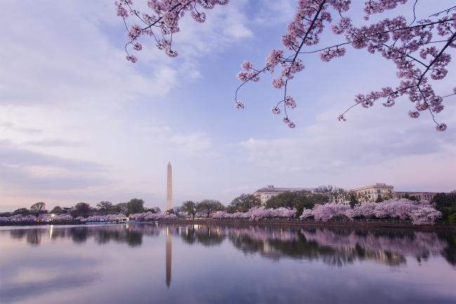 cherry blossom, washington dc, sunrise, washington monument, tidal basin, cherry blossom festival, reflection, nation's capital, cherry trees, sakura, japanese gift