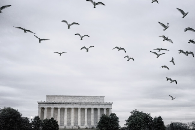 washington dc, birds, pigeons, sunrise, early morning, lincoln memorial, nations capital, national mall, trees, united states, visit,