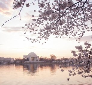 cherry blossoms, washington dc, tidal basin, jeffersn memorial, sakura, cherry trees, spring, ripples, water, puffy clouds, white, pink, purple, sunrise, early morning, bird, duck, poetic, hdr, chromatic aberration, photoshop, editing, processing, photography, photo, photographer, landscape, process, tutorial video, workflow, beautiful, nation's capital, washington dc