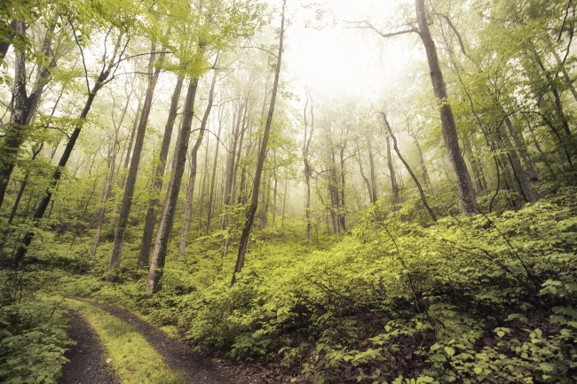 may, blue ridge mountains, va, trail, fog, trees, green, wallpapers, free downloads, folders, desktop, canon, 5d mark ii, landscape, scenic, nature, photography, camera settings, mountains, mood,