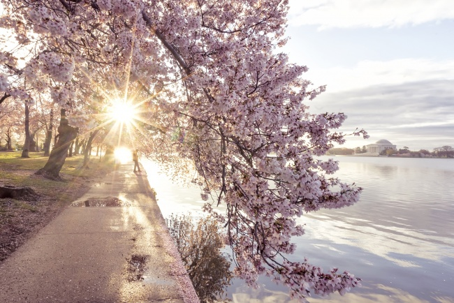 washington dc, tidal basin, jefferson memorial, cherry blossoms, camera settings, exposure, water, tripod, spring, visit, travel, road trip, dc, nations capital, pink,