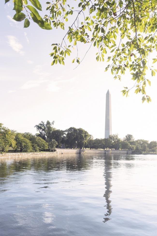 washington monument, tidal basin, reflection, doctors office, leaves, cherry blossoms, trees, leaves, morning light, early morning, washington dc, visiting, travel, tidal basin